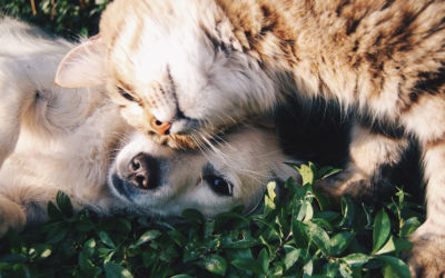 More than 40 percent have one or more pets